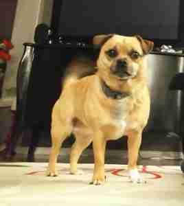 jug dog from Canada