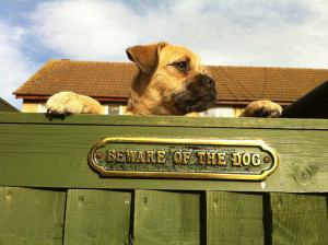 Jug guarding a house